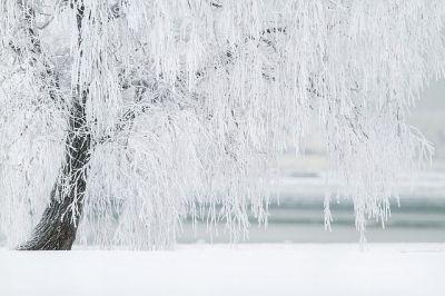 curso macrobiótica invierno