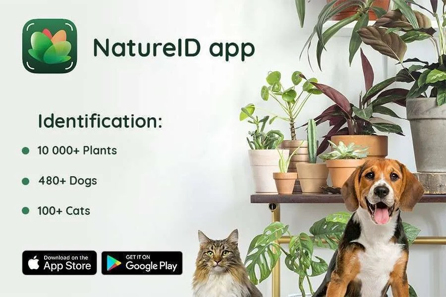 NatureID for iOS Receives Update NEWS