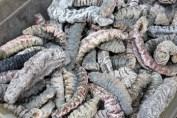 concombres de mer