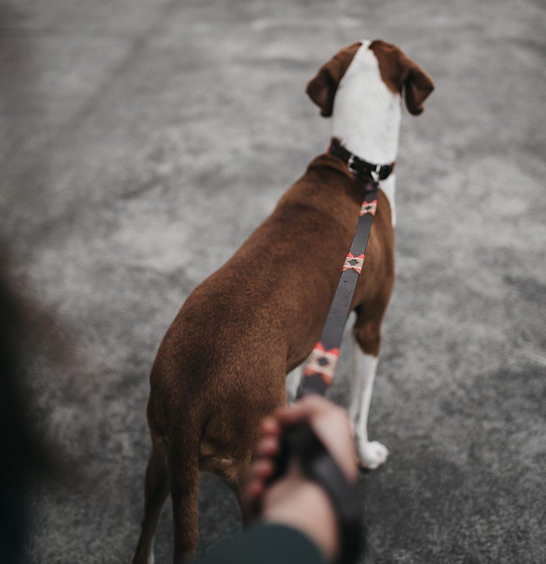 Collar de perro y correa Martina