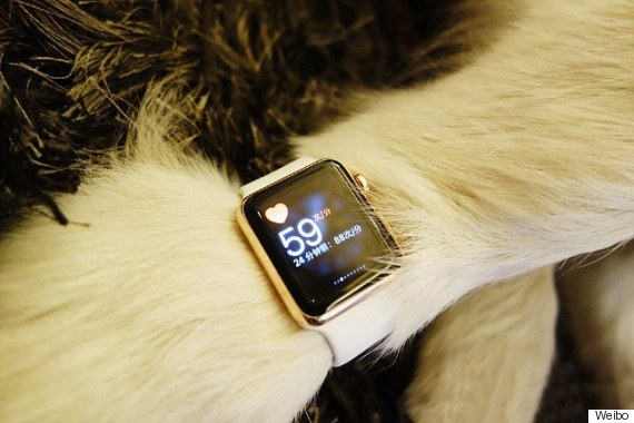 Husky wears two Apple Watches