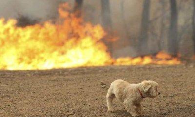 κτηνίατροι προσφέρουν δωρεάν τις υπηρεσίες χαμένα κατοικίδια στις περιοχές που κάηκαν