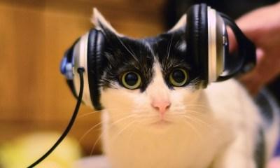 Γάτα που ακούει μουσική