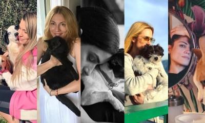 Πέντε Ελληνίδες celebrities, που υιοθέτησαν αδέσποτα www.mad.gr