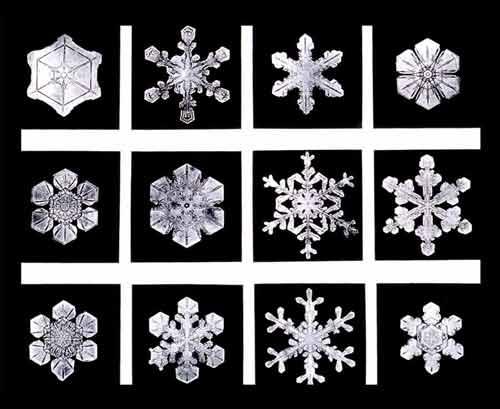 SnowflakesWilsonBentley