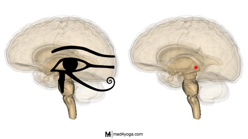 La glándula pineal y el ojo egipcio