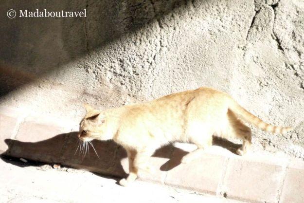 Gato al sol en Fonz