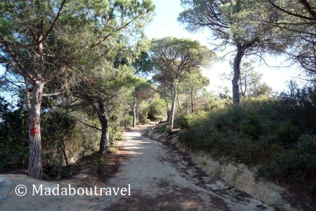 Pinos en el camino al Castell de Burriac desde Argentona