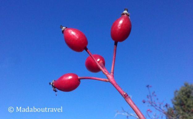 Arbusto en el Montseny