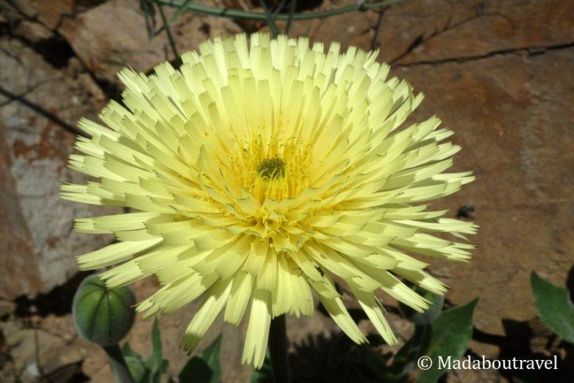 Flor en la Serralada Litoral