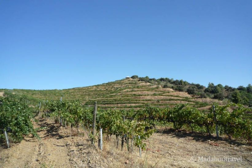 Hectáreas de viñedos ecológicos en Mas Blanc, DO Priorat