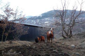Caballos en el camino de Isavarre a Esterri