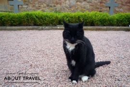 La mascota felina de la capilla de Rosslyn