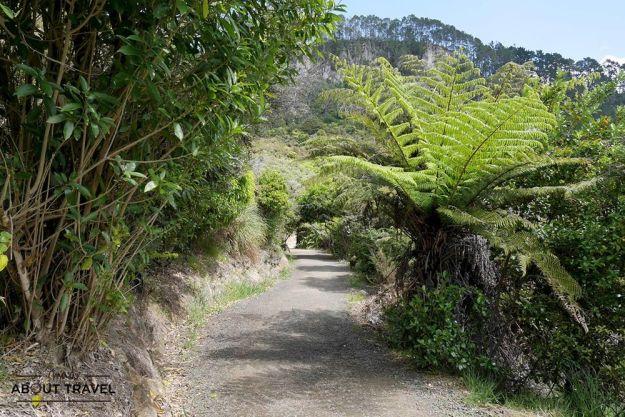 Cathedral Cove, Nueva Zelanda