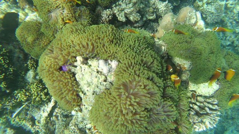 snorkel en maldivas: nemos