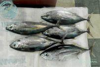 que ver en male: mercado del pescado