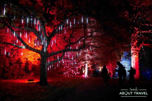 Navidad en Edimburgo: Christmas Lights en el Jardín Botánico