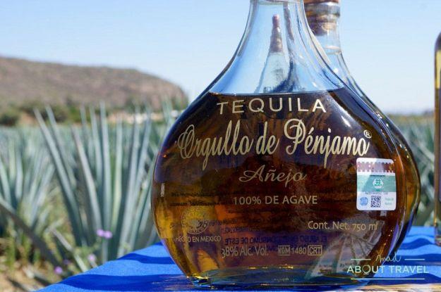 que hacer en guanajuato: ruta del tequila