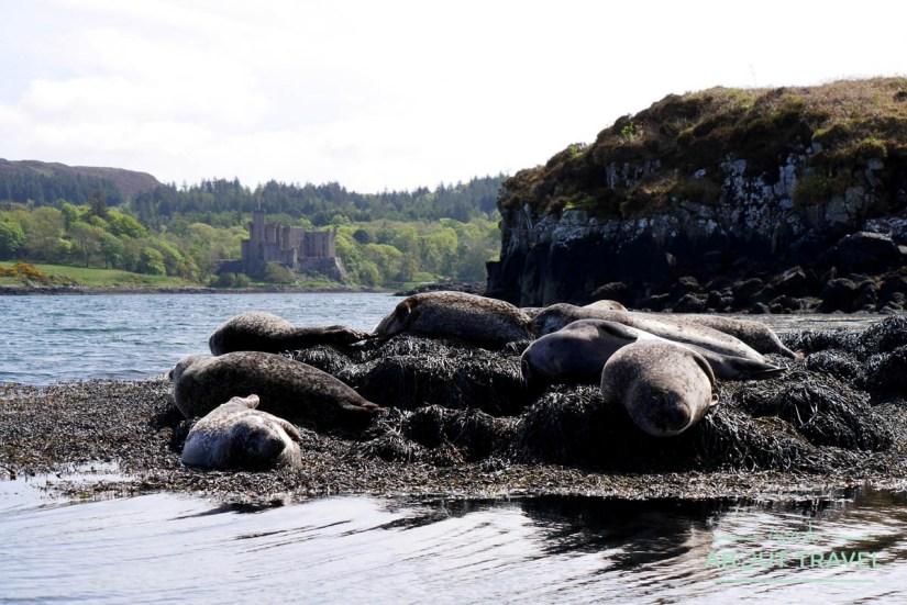 Focas en la bahía de Dunvegan