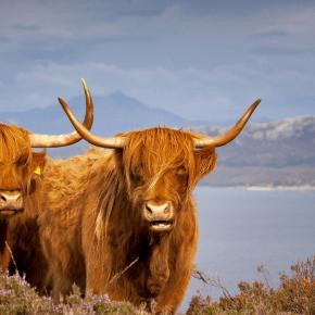 Viajar a Escocia después del Brexit – Toda la información