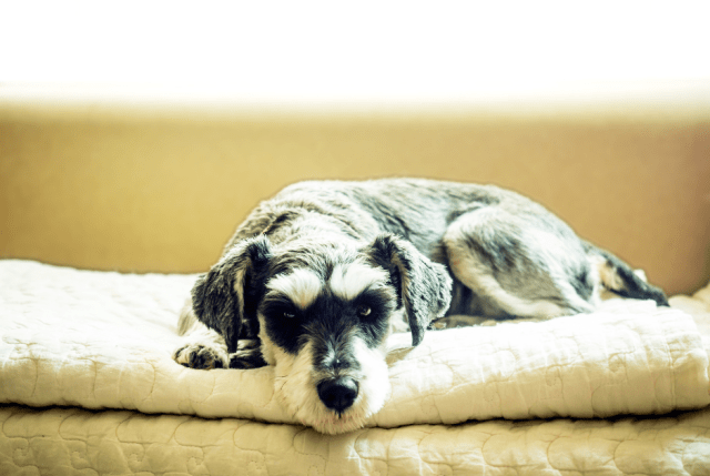 Nutrition for Senior Dogs