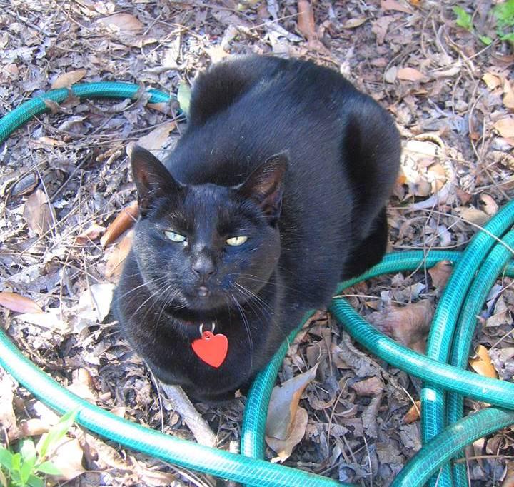 My Black Cat Familiar - Madalyn Aslan