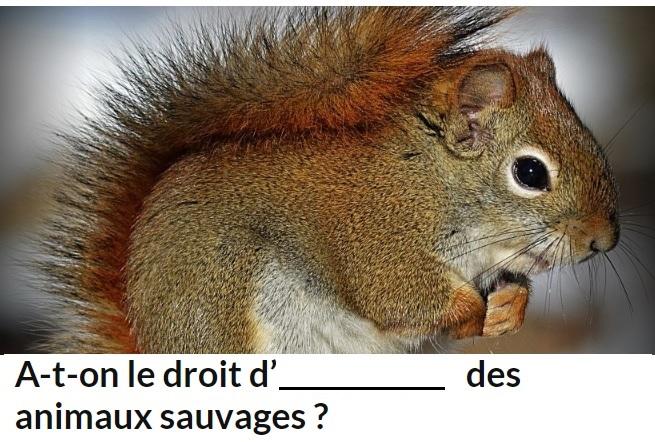 Champs-Elysées sneak peek question