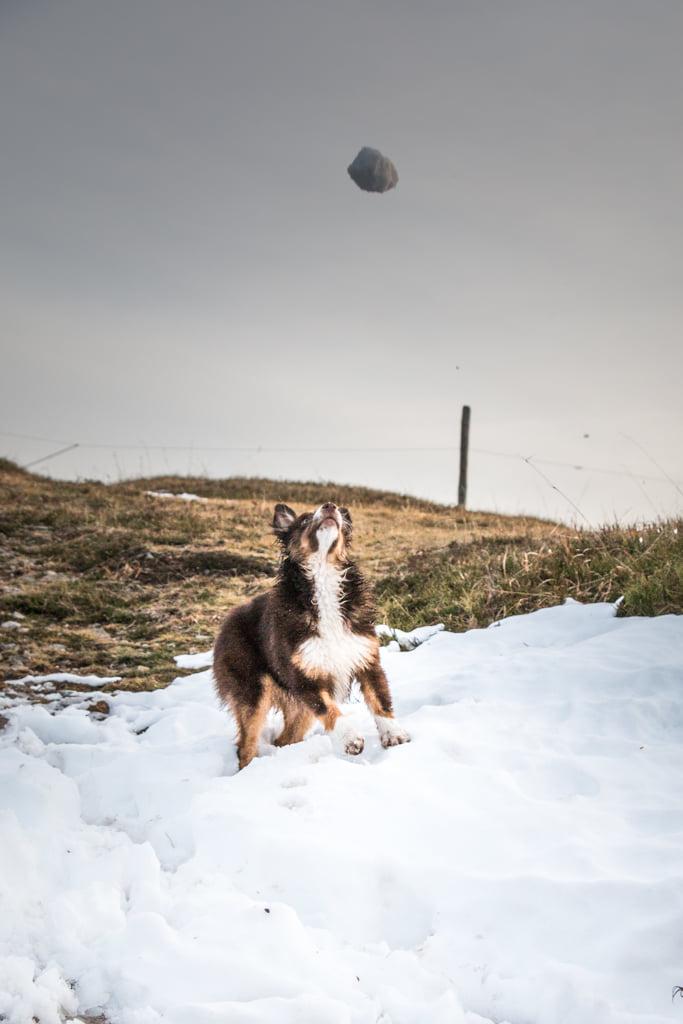 Nova dans la neige au Hohneck madame voyage