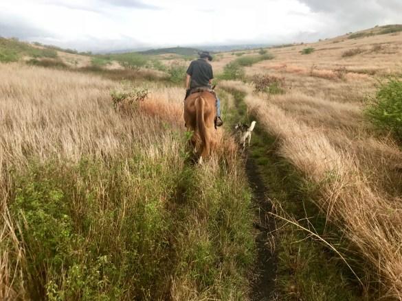 activités sportives balade à cheval sur l'île de la réunion avec Shaiena