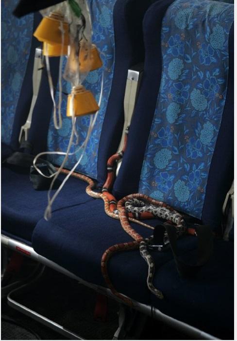 Snakes on The Plane(2006) source imdb.com