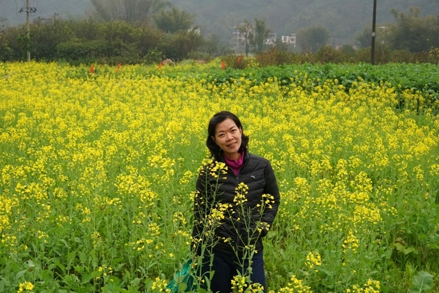 Nasib bunga tulip (Keukenhoff) diganti bunga Caisim