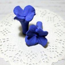 Василёк мелкий Цветочек