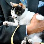 ニタマ駅長に部下のよんたまが駅長見習いに!猫の威力