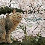 尾道・観光スポット「猫の細道」の福石猫が超かわゆい~