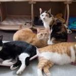 保護猫シェルター「ホステルねこ蔵」猫と遊び格安で宿泊