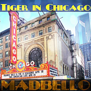 Tiger in Chicago1500c