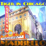 Tiger in Chicago1500x