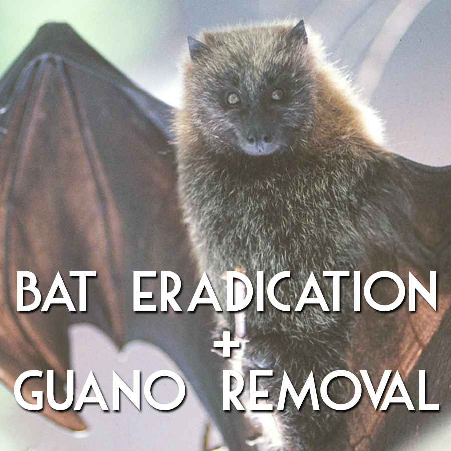 Bat Eradication and Guano Removal by MadCity Environmental