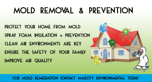 Mold Remediation + Prevention