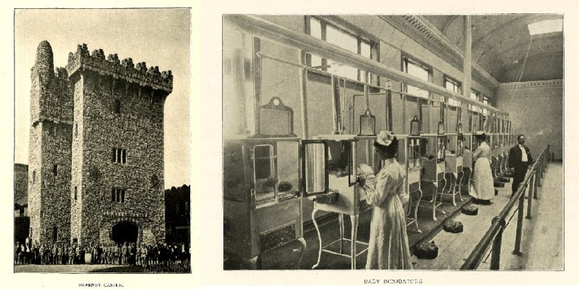 Blarney Castle and baby incubators