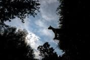 Zebra in the sky