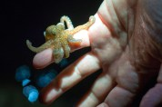 A little octopus, at 9pm