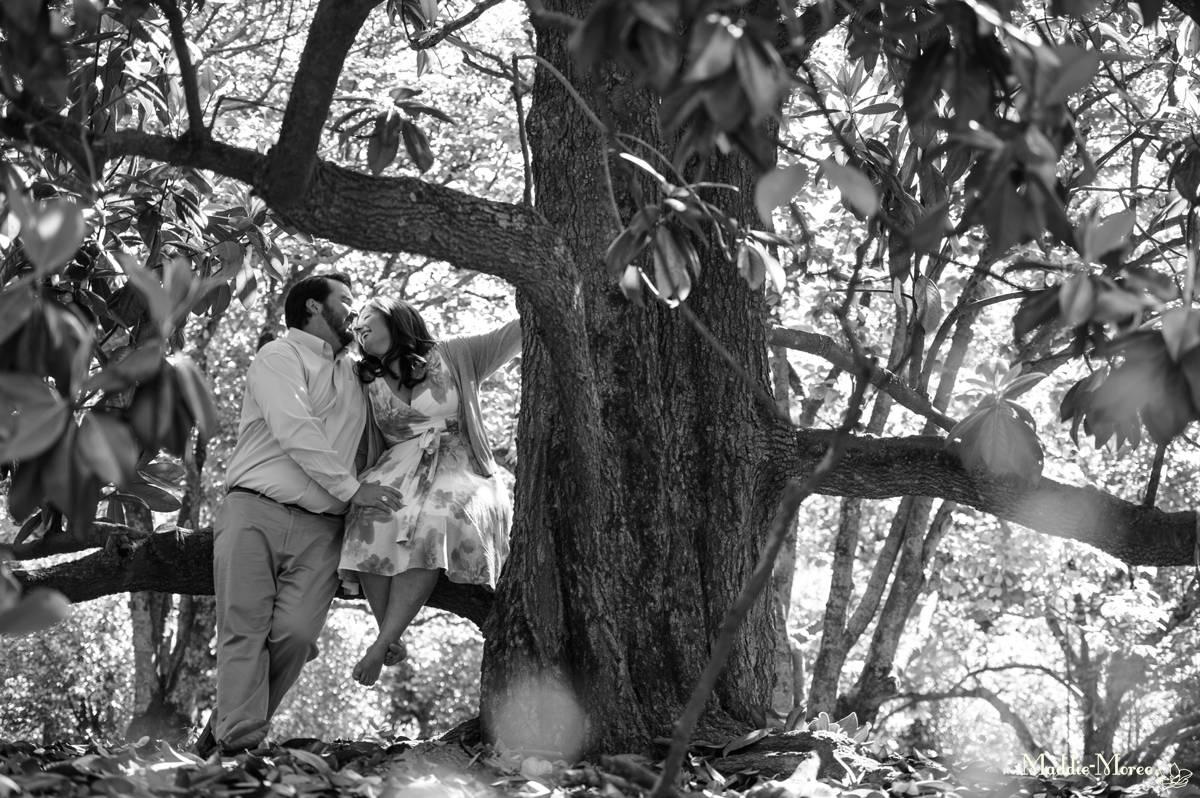 Magnolia trees Botanic Maddie Moree