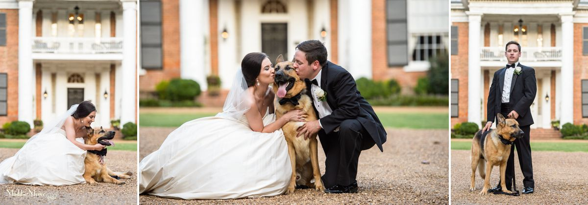 Dog bride and groom photos