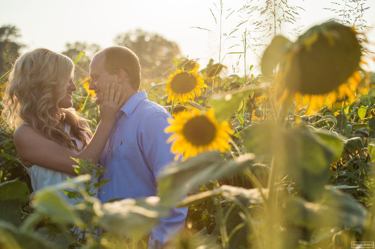 sunflower sunset engagement photography memphis