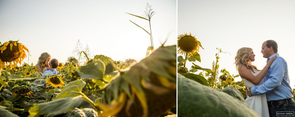 memphis engagement sunflowers