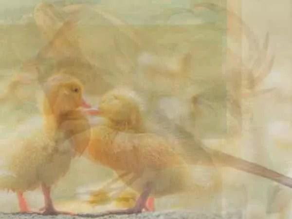 6-24-e1490731265507 | Какое животное вы увидели первым на картинке? Тест на характер