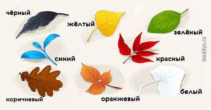 Тест на самопознание: выбери листочек и узнай что-то новое для себя...