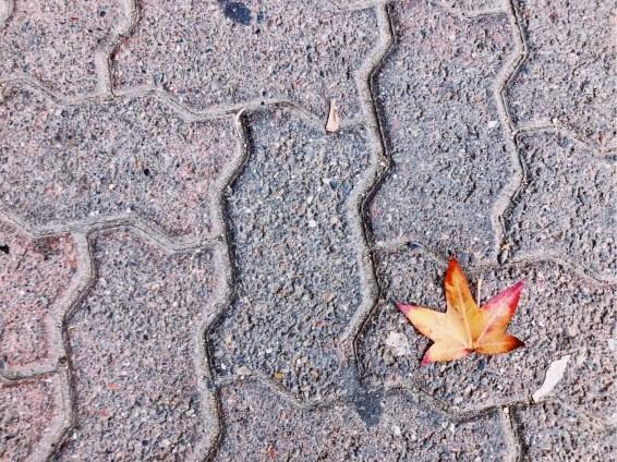 A fallen leaf.