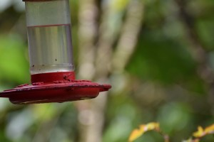 Hummingbird Feeder - Acaime Natural Reserve
